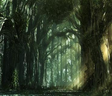 foresta-fantasy-le-tazzine-di-yoko.jpg